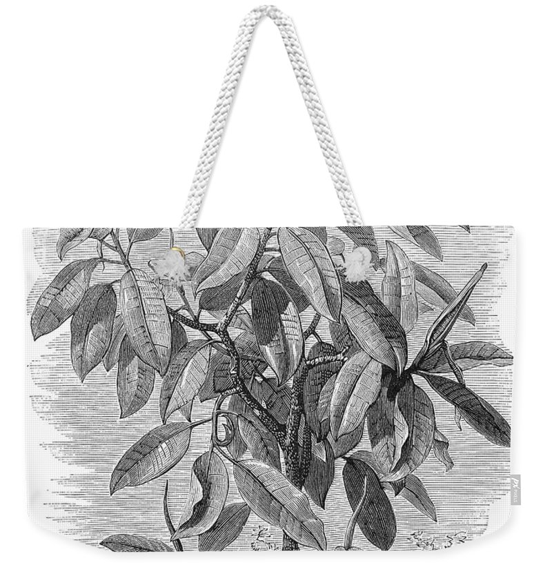 19th Century Weekender Tote Bag featuring the photograph Botany: Ficus Elastica by Granger
