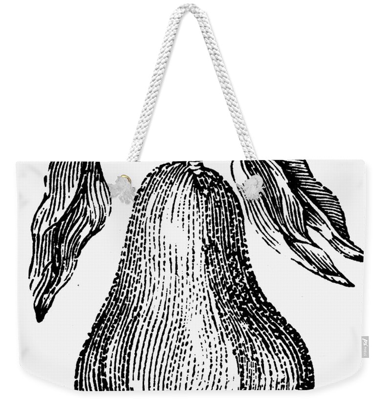 Biology Weekender Tote Bag featuring the photograph Botany: Pear by Granger