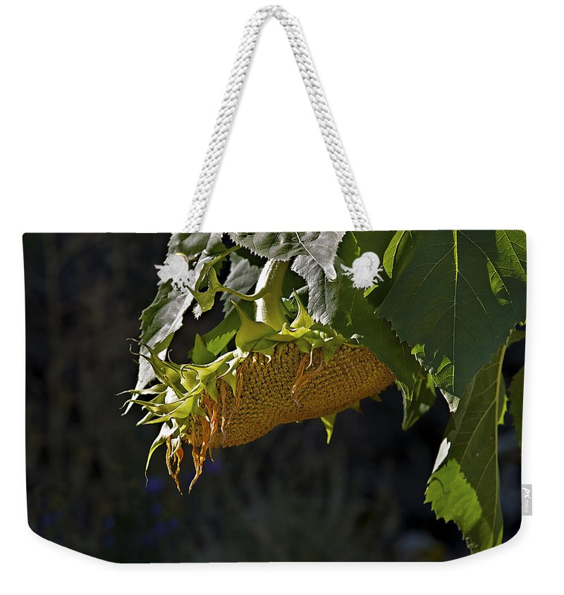 Sunflower Weekender Tote Bag featuring the photograph Bowed Head by Phyllis Denton