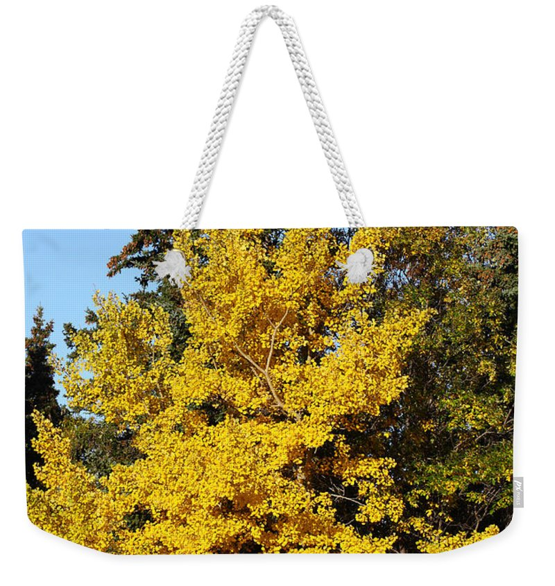 Birch Tree Weekender Tote Bag featuring the photograph Bright Yellow by Doug Lloyd