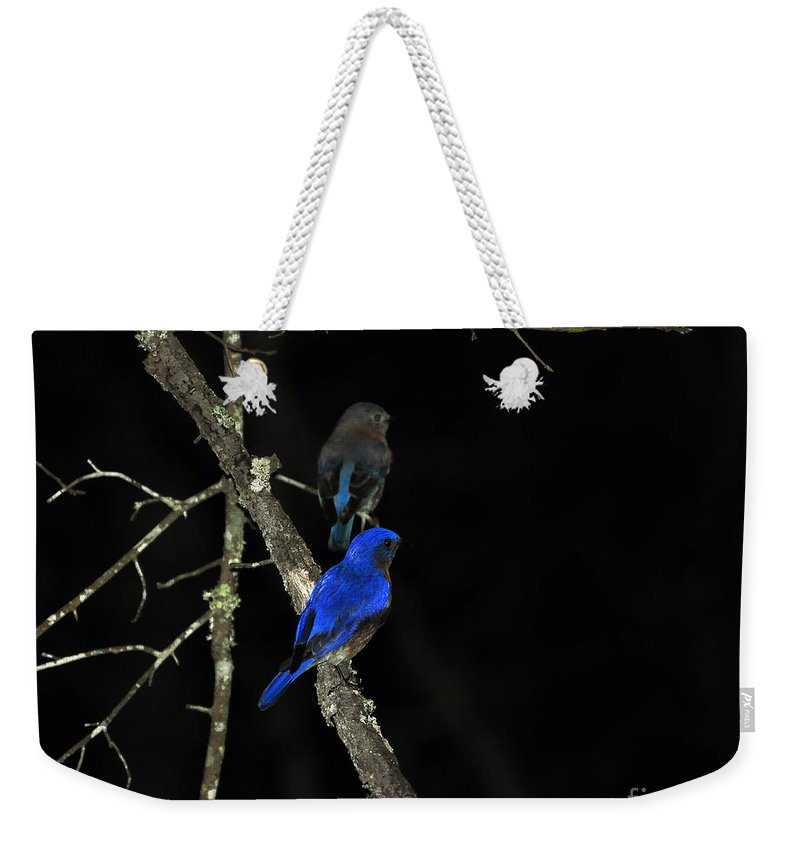 Eastern Bluebird Weekender Tote Bag featuring the photograph Brilliant Blues by Al Powell Photography USA