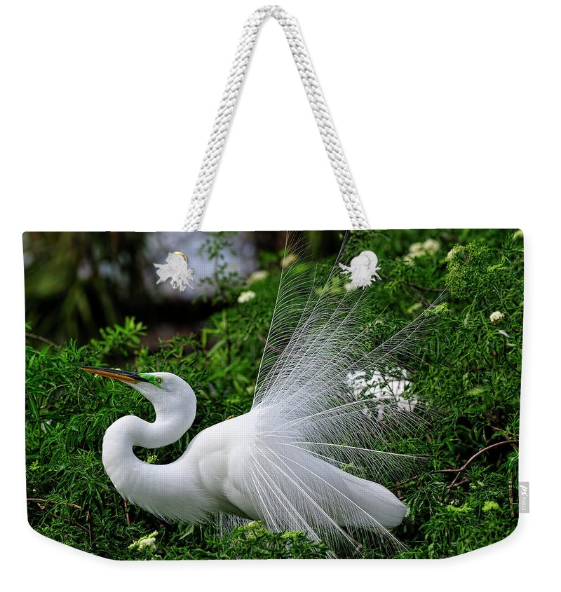 Great White Egret Weekender Tote Bag featuring the photograph Brilliant Feathers by Bill Dodsworth