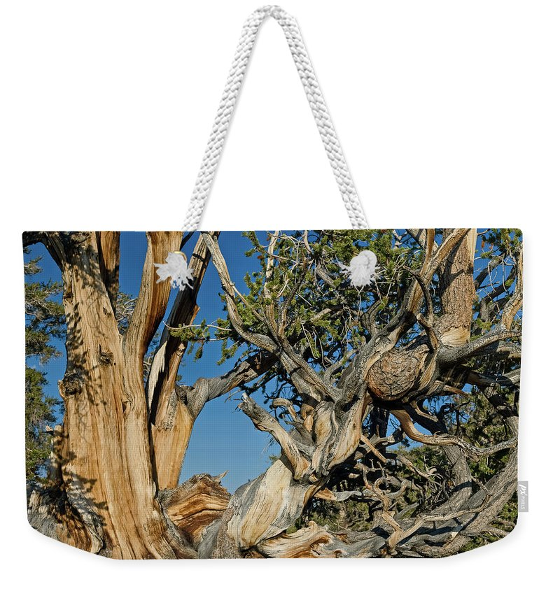 Bristlecone Weekender Tote Bag featuring the photograph Bristlecone Pine by Greg Nyquist