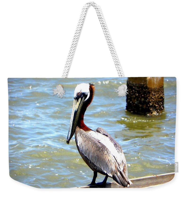 Pelican Weekender Tote Bag featuring the photograph Brown Pelican And Blue Seas by Sheri McLeroy