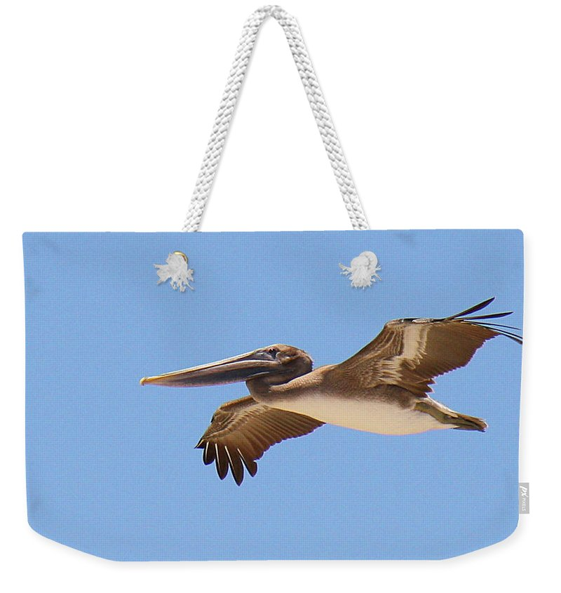 Pelecanus Occidentalis Weekender Tote Bag featuring the photograph Brown Pelican In High Flight by Roena King