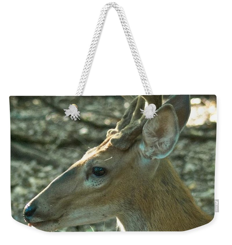 Animal Weekender Tote Bag featuring the photograph Buck 9246 4037 2 by Michael Peychich