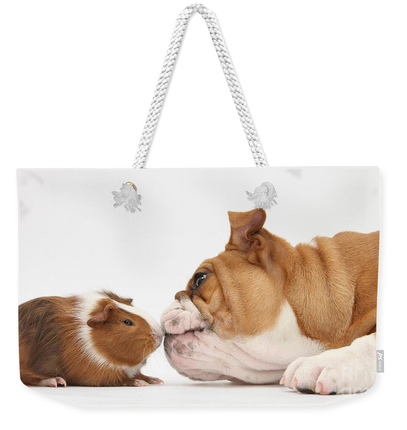 Animal Weekender Tote Bag featuring the photograph Bulldog & Guinea Pig by Mark Taylor