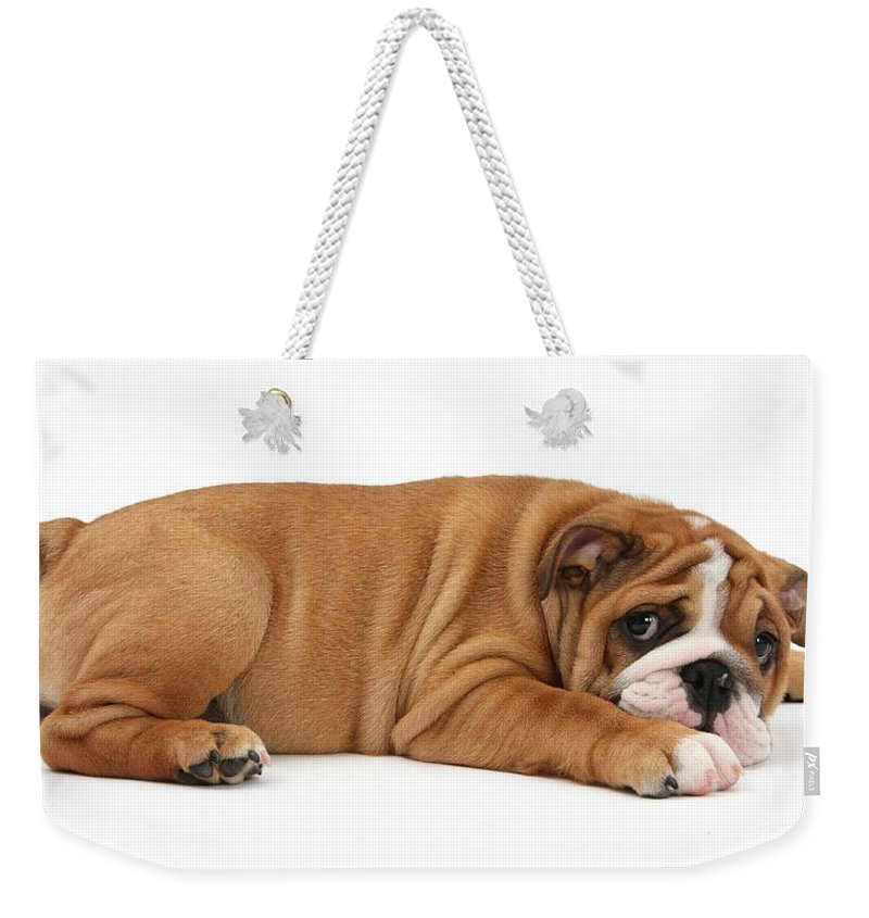 Animal Weekender Tote Bag featuring the photograph Bulldog Puppy by Mark Taylor