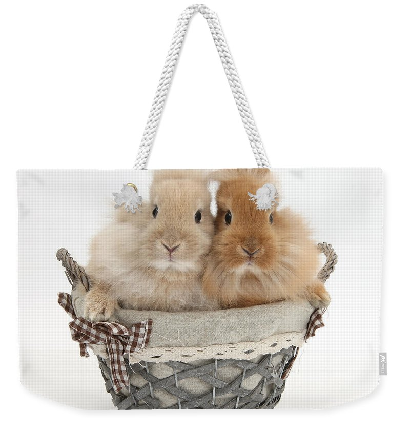 Nature Weekender Tote Bag featuring the photograph Bunnies A Basket by Mark Taylor