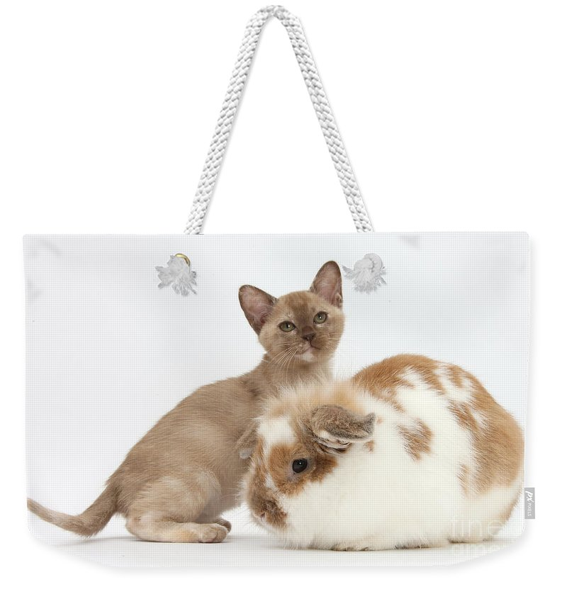 Nature Weekender Tote Bag featuring the photograph Burmese Kitten And Rabbit by Mark Taylor