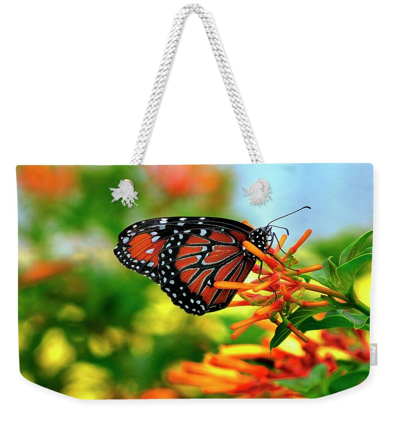 Queen Buterfly Weekender Tote Bag featuring the photograph Burst Of Color by Bill Dodsworth