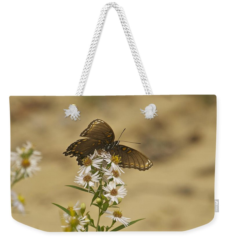 Butterfly Weekender Tote Bag featuring the photograph Butterfly 3322 by Michael Peychich