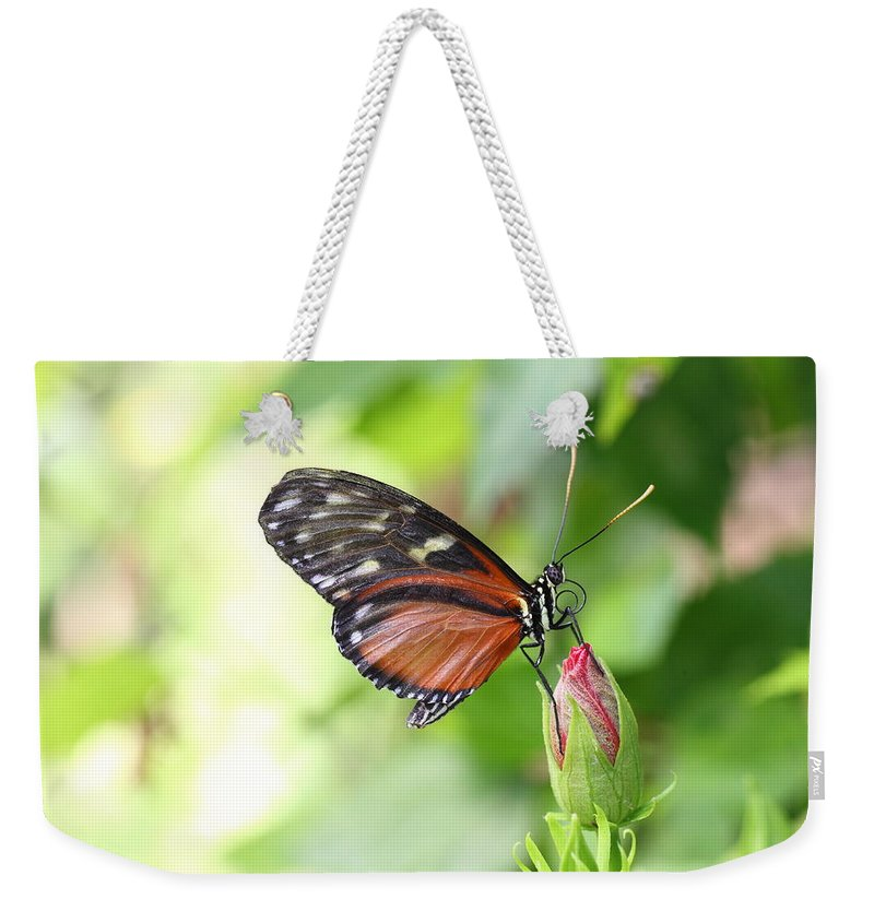 Butterfly Weekender Tote Bag featuring the photograph Butterfly At Rest by Mark Heywood