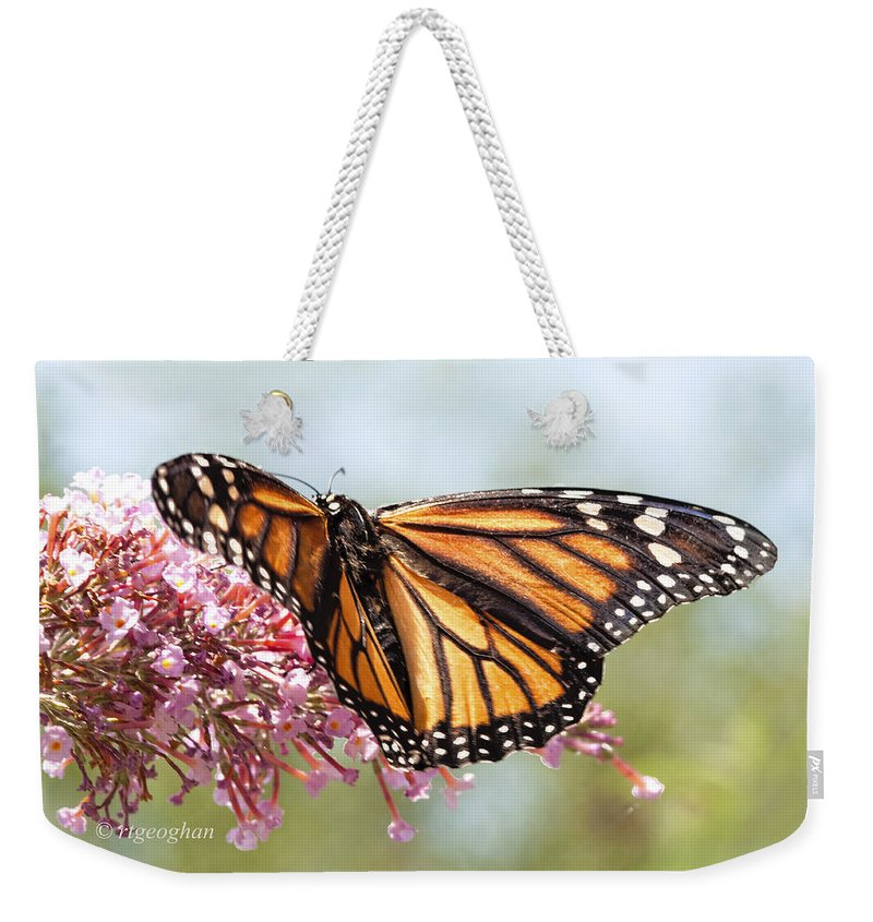 Butterfly Weekender Tote Bag featuring the photograph Butterfly Beauty - Monarch IIi by Regina Geoghan