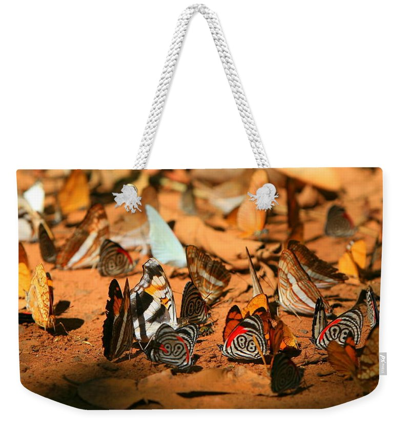 Butterfly Weekender Tote Bag featuring the photograph Butterfly Menagerie by Bruce J Robinson