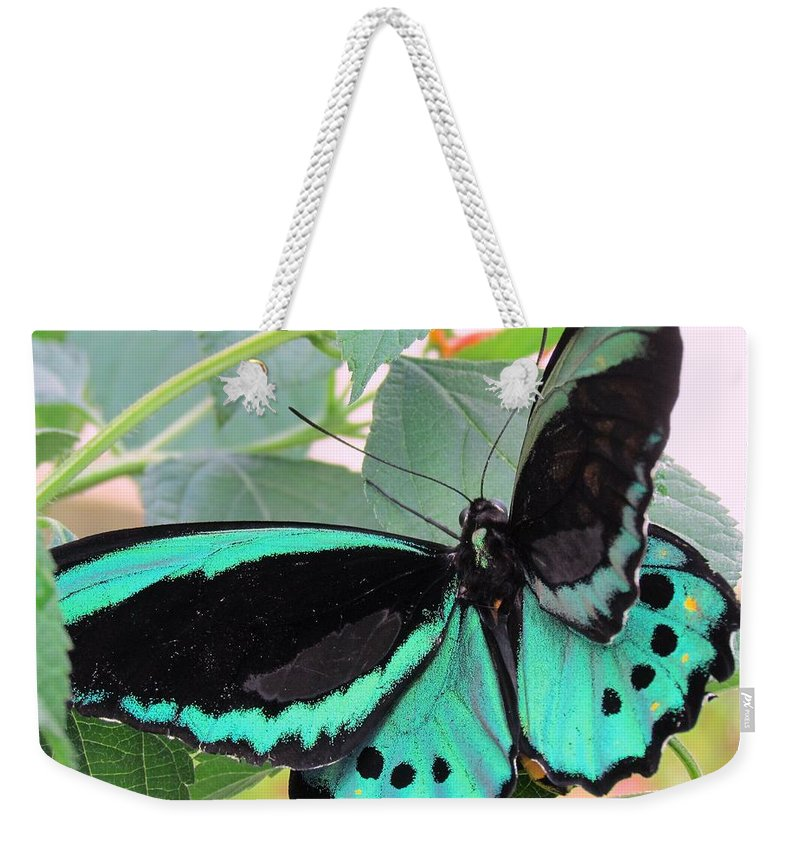 Butterfly Weekender Tote Bag featuring the photograph Butterfly Of Many Colors by Lori Pessin Lafargue