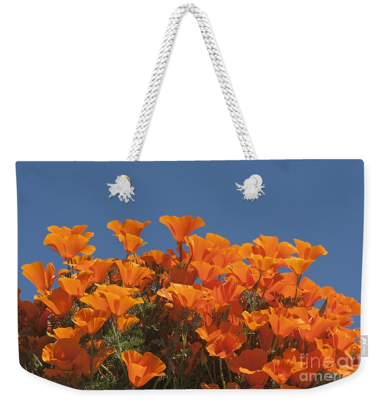 Sandra Bronstein Weekender Tote Bag featuring the photograph California Poppies by Sandra Bronstein