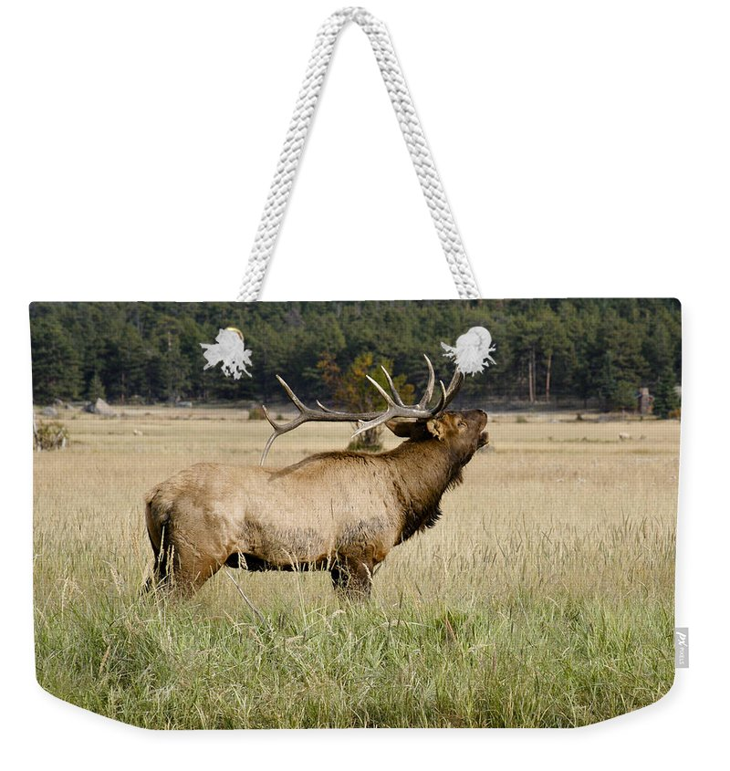 Elk Weekender Tote Bag featuring the photograph Call Of The Wild 2 by Marilyn Hunt