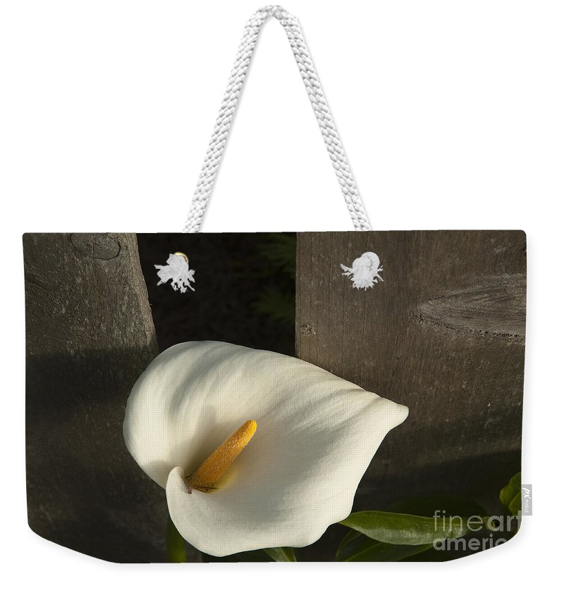 Sandra Bronstein Weekender Tote Bag featuring the photograph Calla Lily And Fence by Sandra Bronstein