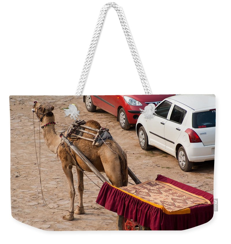 Maruti Weekender Tote Bag featuring the photograph Camel Ready To Take Tourists For A Desert Safari by Ashish Agarwal
