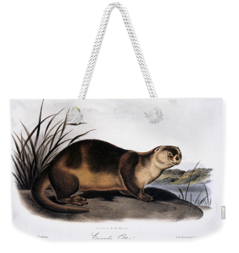 1846 Weekender Tote Bag featuring the photograph Canada Otter, 1846 by Granger