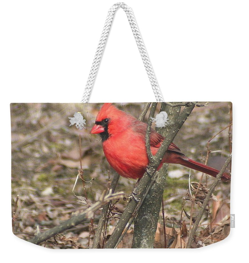 Northern Cardinal Weekender Tote Bag featuring the photograph Cardinal In A Bush by Laurel Talabere
