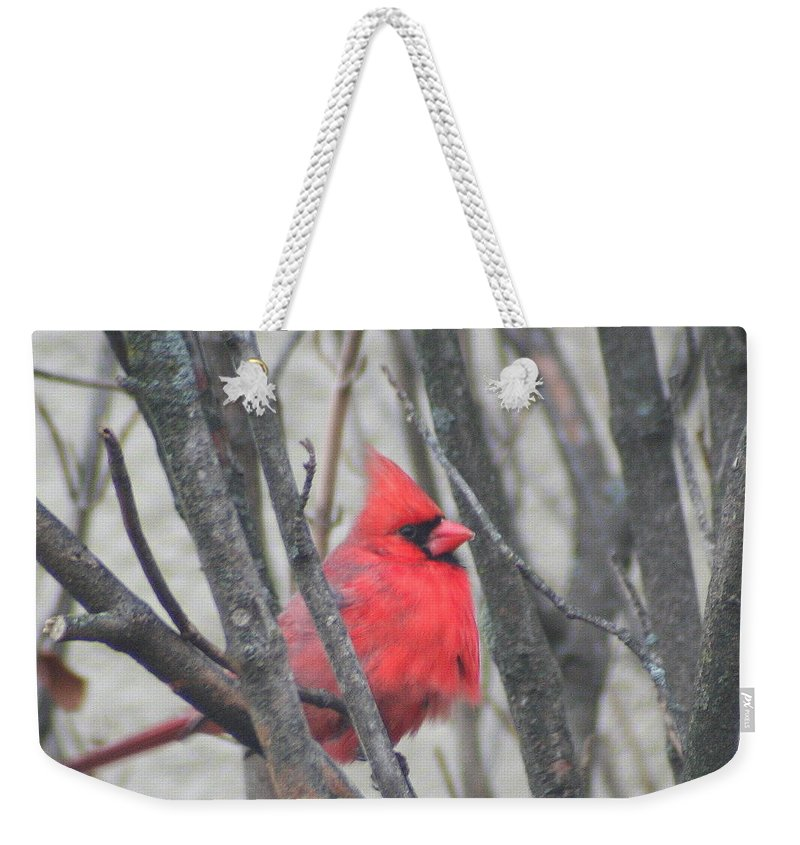 Northern Cardinal Weekender Tote Bag featuring the photograph Cardinal With Fluffed Feathers by Laurel Talabere