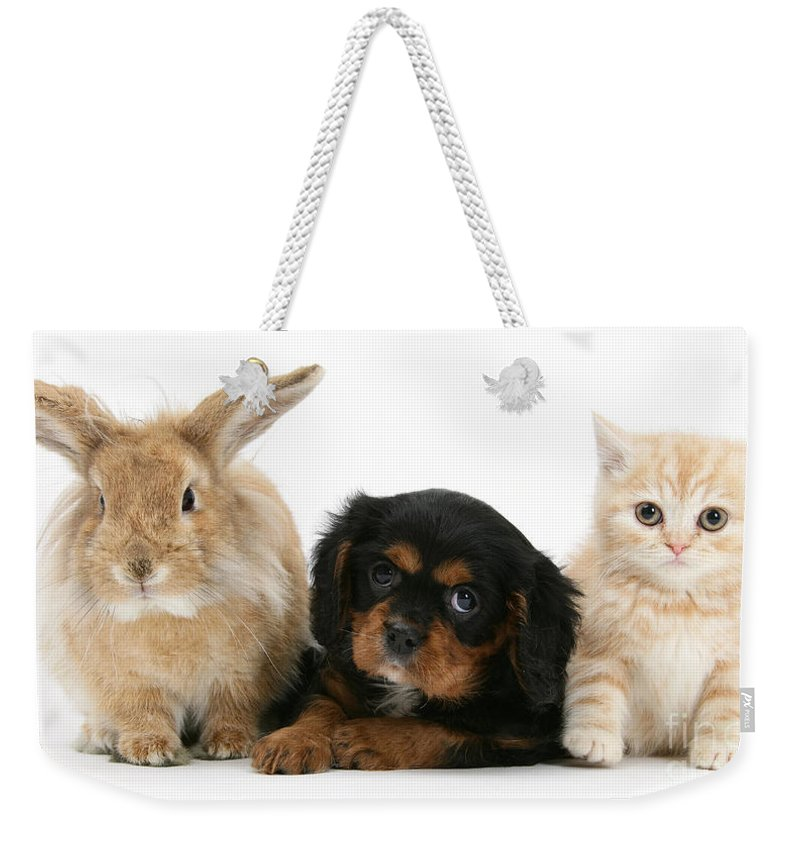 Animal Weekender Tote Bag featuring the photograph Cavalier King Charles Spaniel Pup by Mark Taylor