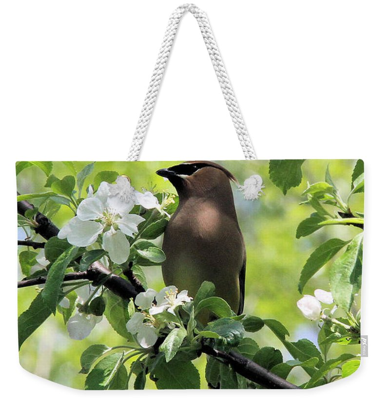 Cedar Waxwing Weekender Tote Bag featuring the photograph Cedar Waxwing Among Apple Blossoms by Doris Potter