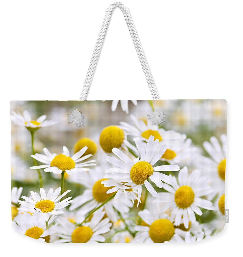 Chamomile Weekender Tote Bag featuring the photograph Chamomile Flowers by Elena Elisseeva