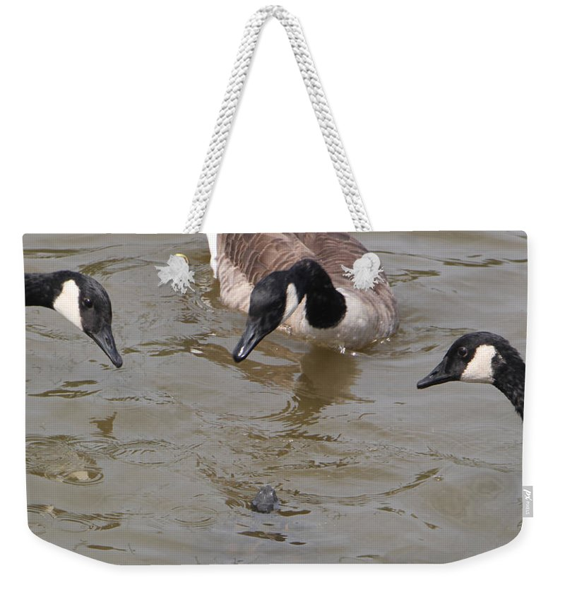 Geese Weekender Tote Bag featuring the photograph Check Out The Turtle by Ericamaxine Price