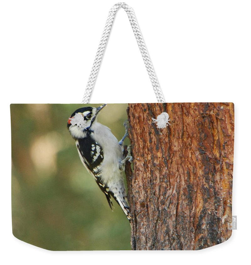 Bird Weekender Tote Bag featuring the photograph Checking It Out by Grace Grogan