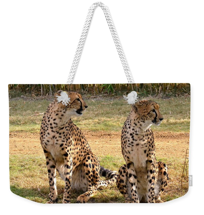 Cheetah Weekender Tote Bag featuring the photograph Cheetah Chat 1 by Carol Bradley