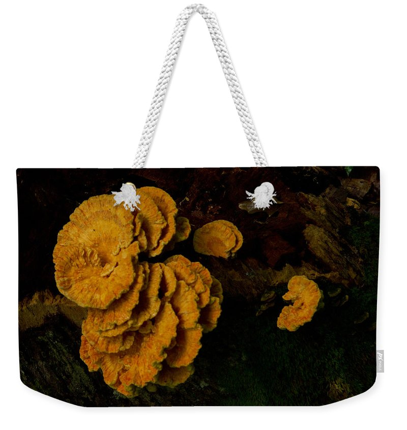 Fungus Weekender Tote Bag featuring the photograph Chicken Of Woods 1 by Douglas Barnett