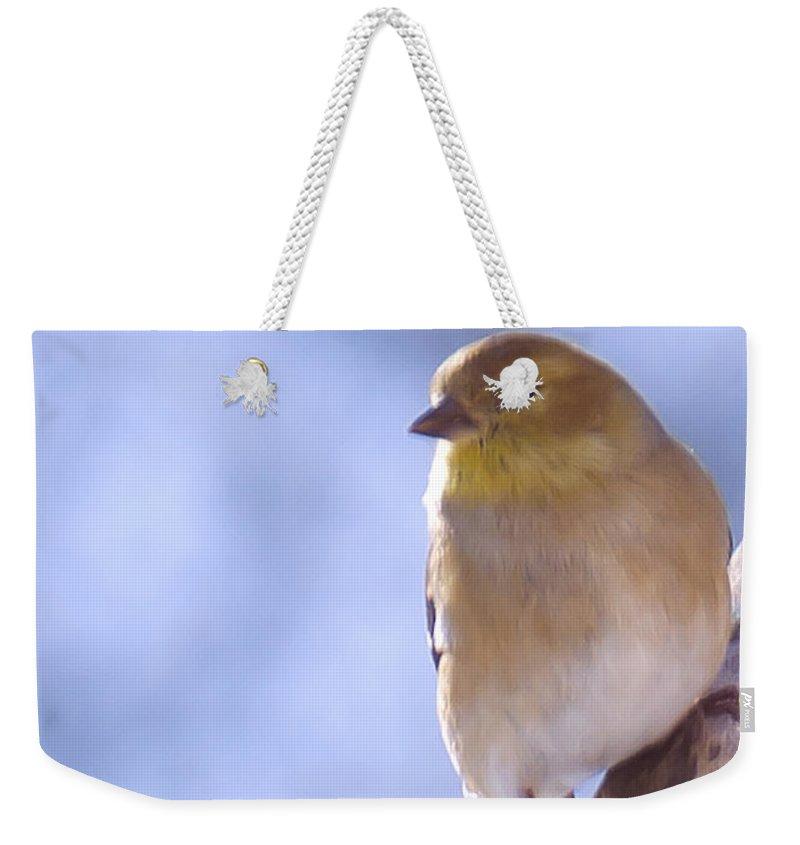 Animals Weekender Tote Bag featuring the photograph Chickie Chickie by LeeAnn McLaneGoetz McLaneGoetzStudioLLCcom