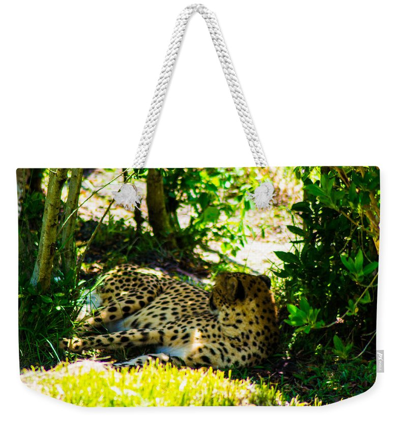 Weekender Tote Bag featuring the photograph Chillin by Shannon Harrington
