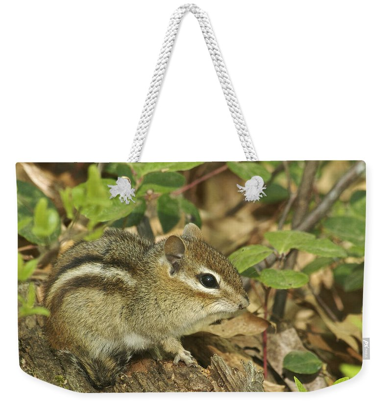 Chipmunk Weekender Tote Bag featuring the photograph Chipmunk by Michael Peychich