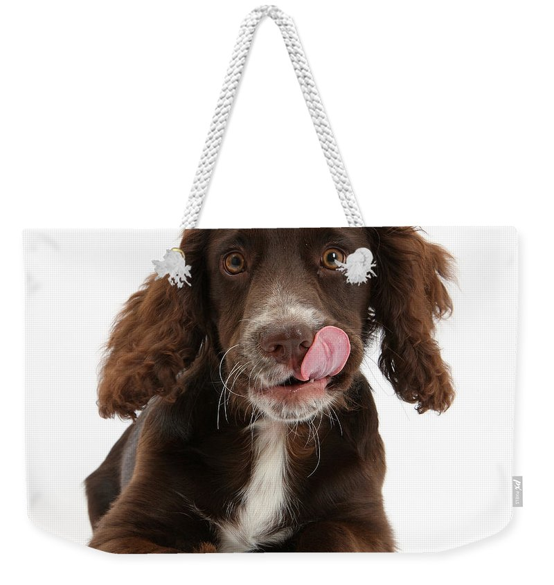 Animal Weekender Tote Bag featuring the photograph Chocolate Cocker Spaniel by Mark Taylor