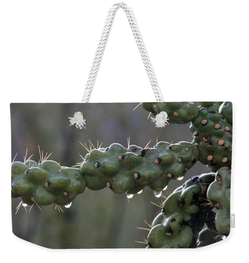 Cholla Weekender Tote Bag featuring the photograph Cholla Cactus In The Rain by Elizabeth Rose
