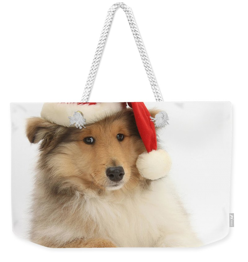 Dog Weekender Tote Bag featuring the photograph Christmas Collie Pup by Mark Taylor