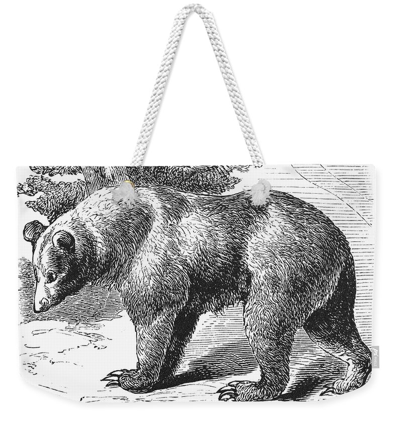 19th Century Weekender Tote Bag featuring the photograph Cinnamon Bear by Granger