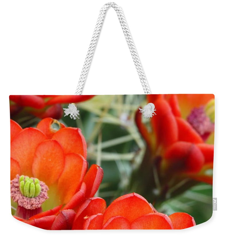 Cactus Weekender Tote Bag featuring the photograph Claret-cup Cactus 2am-28736 by Andrew McInnes