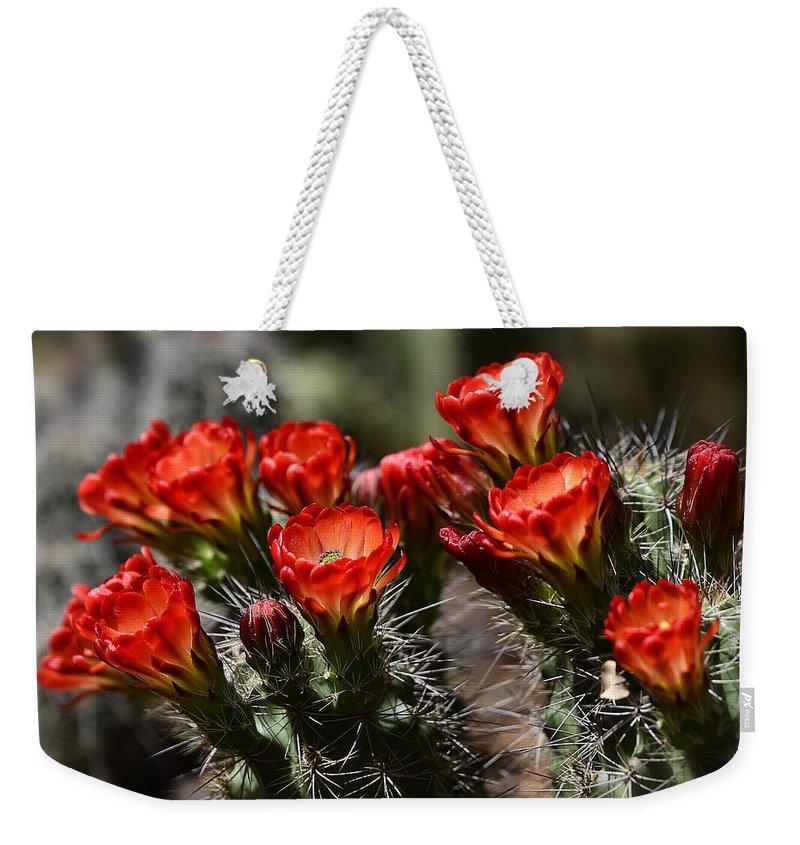 Claret Cup Cactus Weekender Tote Bag featuring the photograph Claret Cup Cactus by Saija Lehtonen