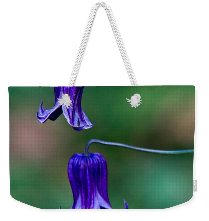 Clematis Weekender Tote Bag featuring the photograph Clematis Integrifolia Rooguchi 2 by Douglas Barnett