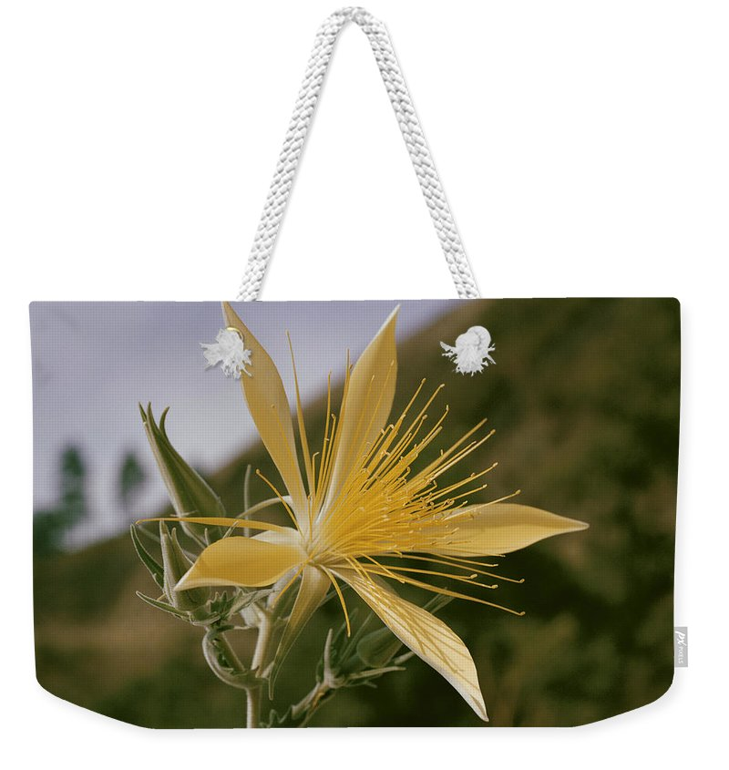 nez Perce National Forest Weekender Tote Bag featuring the photograph Close-up View Of A Blazing Star by B. Anthony Stewart