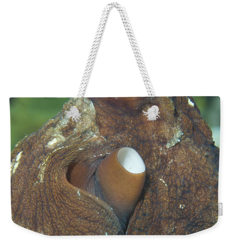 Cephalopod Weekender Tote Bag featuring the photograph Close-up View Of A Common Octopus by Steve Jones