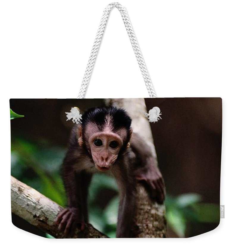 Borneo Island Weekender Tote Bag featuring the photograph Close View Of A Baby Macaque by Mattias Klum