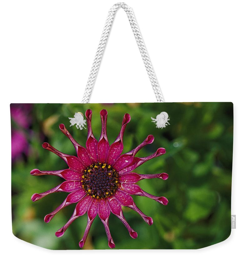 Patterns Weekender Tote Bag featuring the photograph Close View Of A South African Daisy by Jonathan Blair