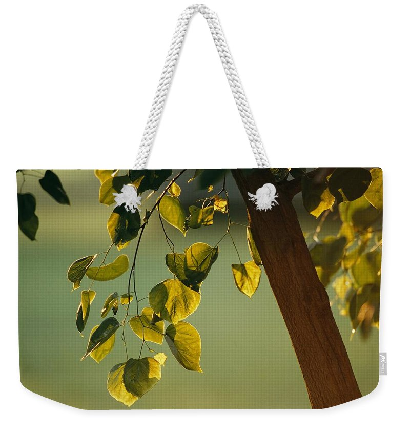 North America Weekender Tote Bag featuring the photograph Close View Of A Tree Branch And Leaves by Raymond Gehman