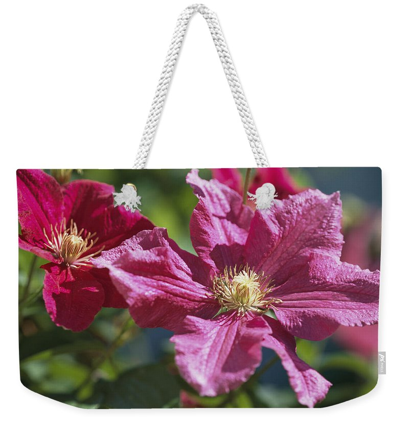 Plants Weekender Tote Bag featuring the photograph Close View Of Clematis Flowers by Darlyne A. Murawski